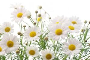 chamomile for hyperthyroidism in children